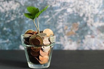 seedling grow in a glass filled with coinss